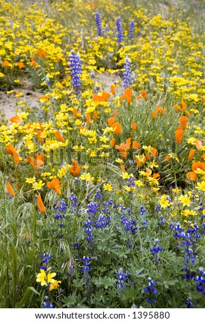 Multicolored spring flowers in the countryside. - stock photo