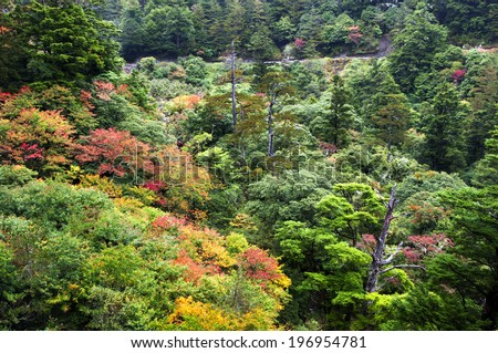 Multicolored trees in a small valley during the season change. - stock photo