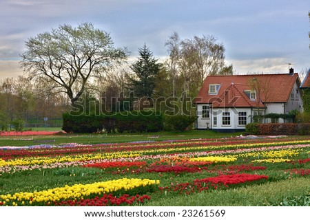 Multicolored tulips field in Keukenhof, The Netherlands - stock photo