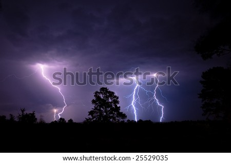 Multiple blue and purple colored forked lightning strikes contacting the ground at night during a summer electrical thunderstorm in South Africa with silhouetted trees in the foreground. - stock photo
