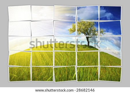 Multiple filmstrip photo frames composing summer landscape with lonely tree