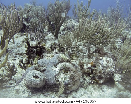 Multiple species of coral on a reef with on fish - stock photo