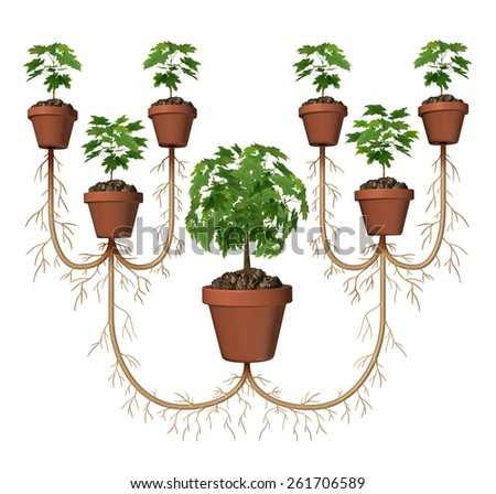 Multiplying profits and compound growth investing business diagram concept as a tree in a planting pot expanding with a group of new saplings as a symbol for expansion and success. - stock photo