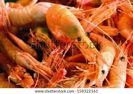 Multitude of boiled shrimps, close-up