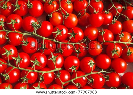 multitude of cherry tomatoes at the vine - stock photo