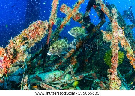 Multitude of colorful tropical fish underwater - stock photo