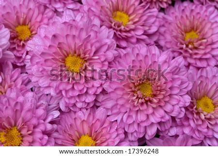 mums - stock photo