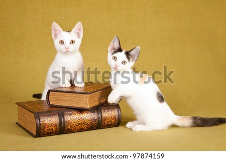 Munchkin kittens with leather books on green background - stock photo