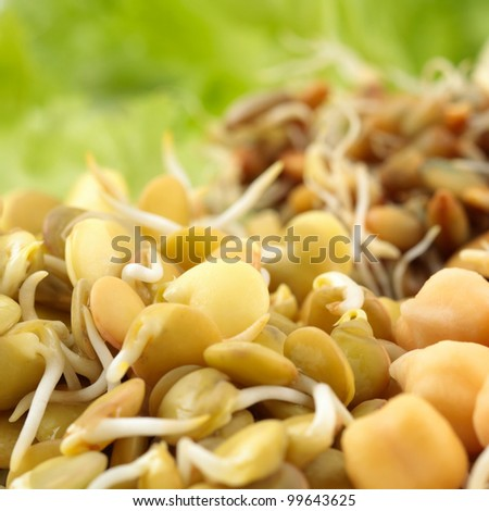 Mung, lentil, rye, wheat and chick-pea sprouts - stock photo