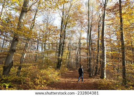 Munich - Germany - November 4, 2014 Walking through the autumn forest
