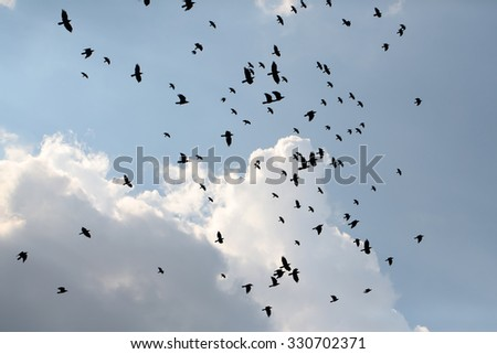 Murder of many black raven birds hovering in high blue sky with cumulus clouds in summer on natural background, horizontal picture - stock photo