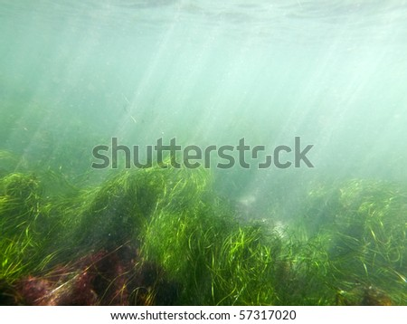Murky ocean water and sea grass at La Jolla Cove in San Diego County, California. - stock photo