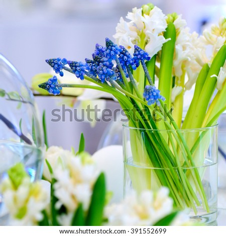 Muscari,tulip,hyacinth flower composition in glass vases. - stock photo