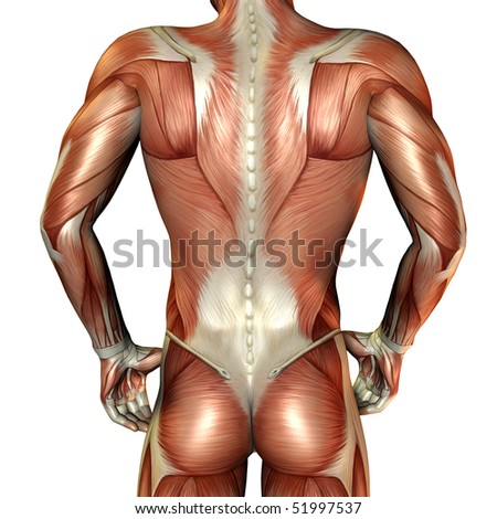 Muscle male back