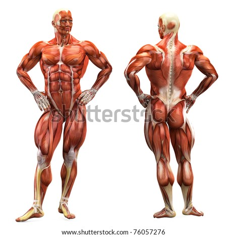 muscle man - stock photo