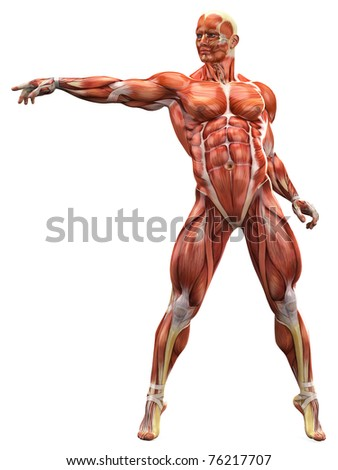 muscle man free style - stock photo