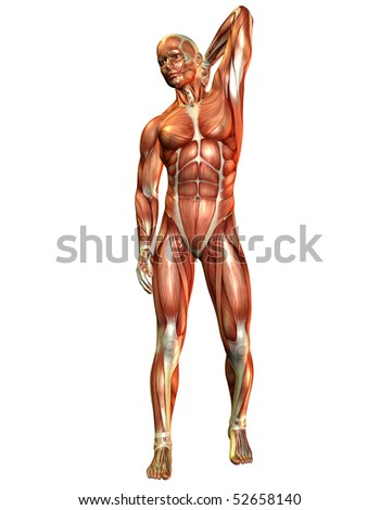 Muscle man from the front - stock photo