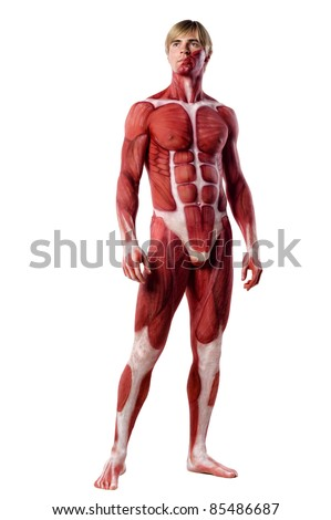 muscle man front view. isolated on white - stock photo