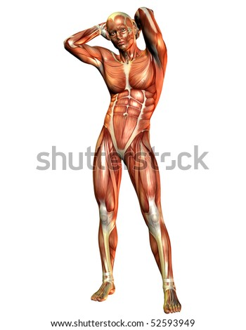 Muscle man standing - stock photo