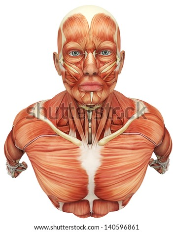 muscle man super up view - stock photo