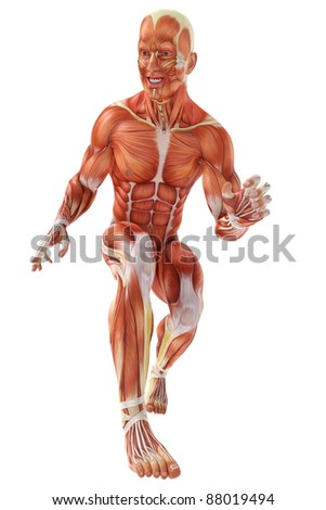 muscle man walking