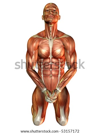 muscle study of a man on his knees - stock photo