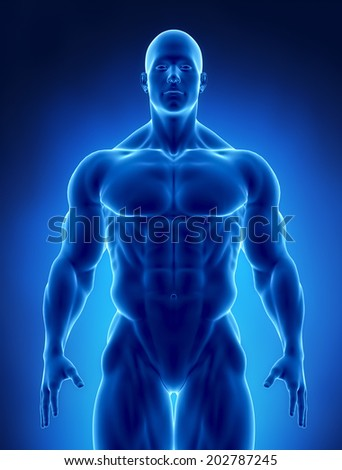 Muscular concept - stock photo