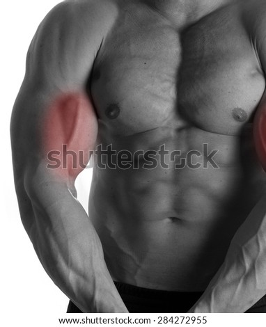 Muscular male torso with biceps selected on white background