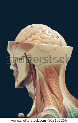 muscular of human with old style - stock photo
