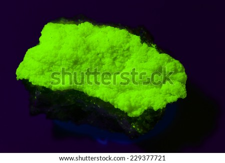 MUSEUM MINERAL SERIES: Uranium ore (meta-autunite) under ultraviolet light, from miniera Assuncao, Fereira de Aves, Portugal. 4cm across. - stock photo