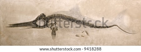 Museum quality cast of a Lower Jurassic Ichthyosaur from the Lias formation in Holzmaden, Germany with shadow of original body shape. - stock photo
