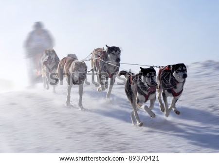 musher hiding behind sleigh at sled dog race on snow in winter - stock photo