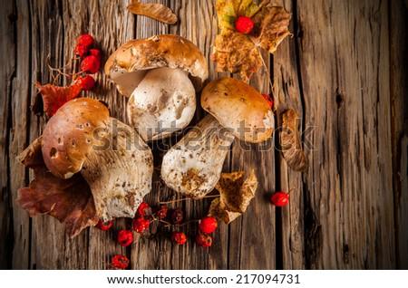 Mushroom Boletus over on wooden table. Autumn Cep Mushrooms - stock photo