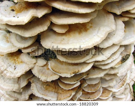 Mushroom family - stock photo