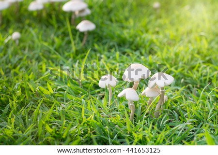 Mushroom, Group of poisonous mushrooms (fungus, toadstools) in the meadow forest. - stock photo