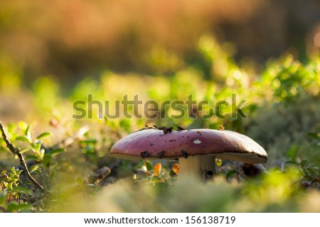 Mushroom Growing at Vivid Forest Bed - stock photo