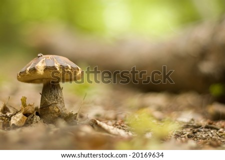 mushroom growing in the forest - stock photo