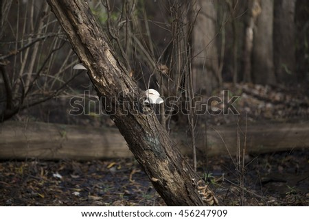 Mushroom growing out of tree - stock photo