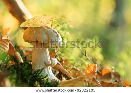 mushroom in forest close up - stock photo