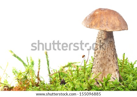 mushroom in moss isolated on white background - stock photo