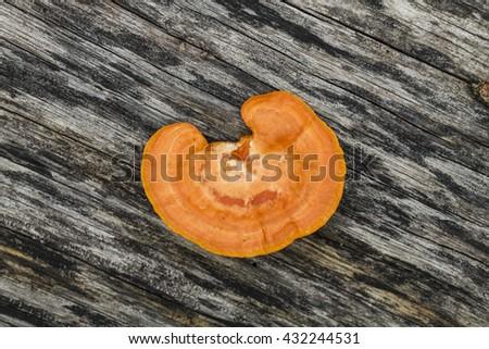 Mushroom in Nature - stock photo