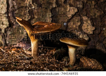 mushroom in the forest - macro photo