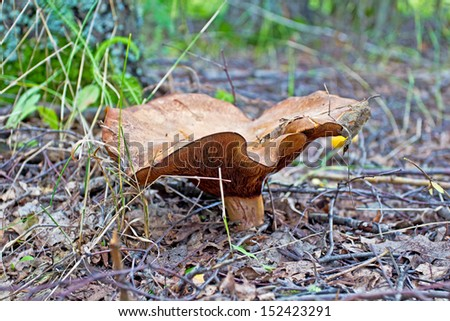 Mushroom In The Woods. High quality stock photo.