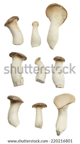 Mushroom isolated on pure white background with clipped path - stock photo