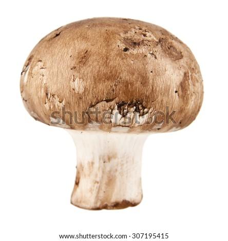mushroom isolated on white background - stock photo