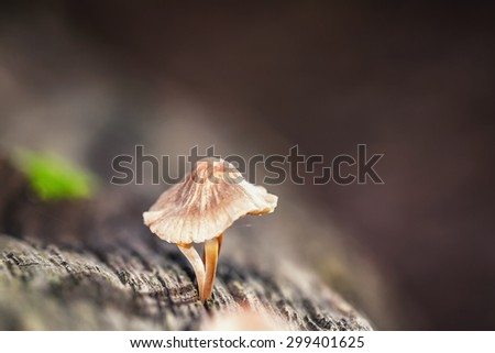 Mushroom Kingdom . Picture of a wildlife forest mushroom in the woods of Bavaria in Germany in fall. Picture was taken on a warm September day.