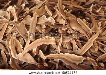 Mushroom Lingzhi Dry Many - stock photo