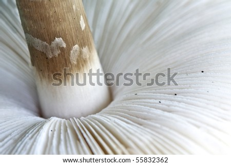 Mushroom macro - stock photo
