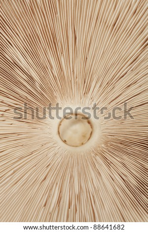 mushroom Macrolepiota seen from underneath  as background - stock photo