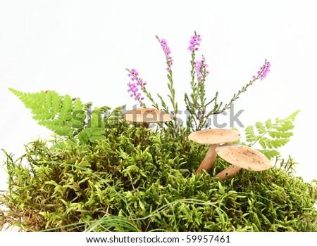 Mushroom, moss and heather on white background - stock photo